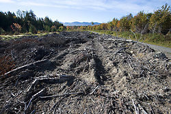 Harvested forest in a state recognized deer wintering area near Rockwood, Maine.  Plum Creek land near East Outlet of the Kennebec River.  Near Moosehead Lake.
