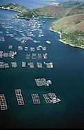 Hong Kong. aerial view of a fish farm  (new territories)  Wu Lei kiu       /  fermes de poissons à   /  fermes de poissons à  Wu Lei kiu  /  Vue aérienne sur la baie de Tolo harbour un espace vierge dans les nouveaux territoires;   Wu Lei kiu      /  R94/40    L1062  /  R00094  /  P0001950