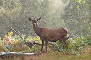 2011 Deer Rut