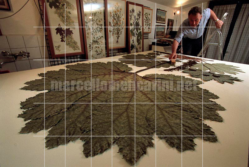 Turin, December 6, 2000. British artist Stuart Thornton in his studio where he composes his botanicals / Torino, 6 dicembre 2000. L'artista inglese Stuart Thornton nel suo studio dove compone i suoi erbari - © Marcello Mencarini
