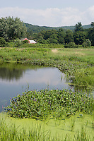 Rich farmland along Deerfield River, Deerfield, MA, a tributary of the Connecticut River.