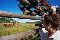 Journalist Judita Hrubesova filming the release of a male European Bison or Wisent (Bison bonasus), donated by Prague Zoo,  into its accomodation enclosure in Bieszczady National Park. Bukowiec, Poland.