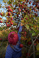 Jessica Laman apple picking in the fall.