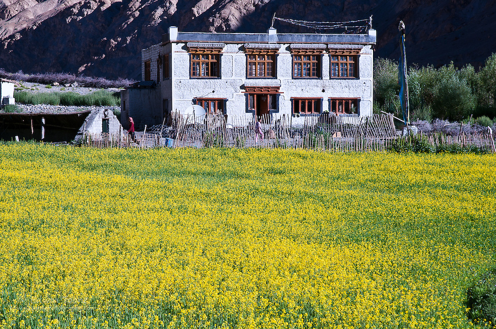 One of the many homestays on the Markha Valley Trek.
