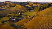 Saffron Fields Vineyard 10-23-19