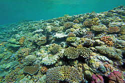 Colourful corals underwater at the Rowley Shoals
