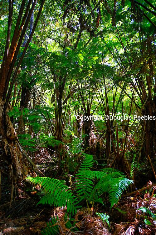 Ola'a Rainforest, HVNP, Big Island Of Hawaii