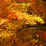 &quot;Sweet Sweet Autumn&quot; <br />