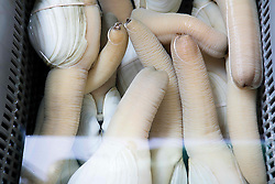 Geoduck (Panopea generosa) clams for sale at fish market in Hong Kong, China.