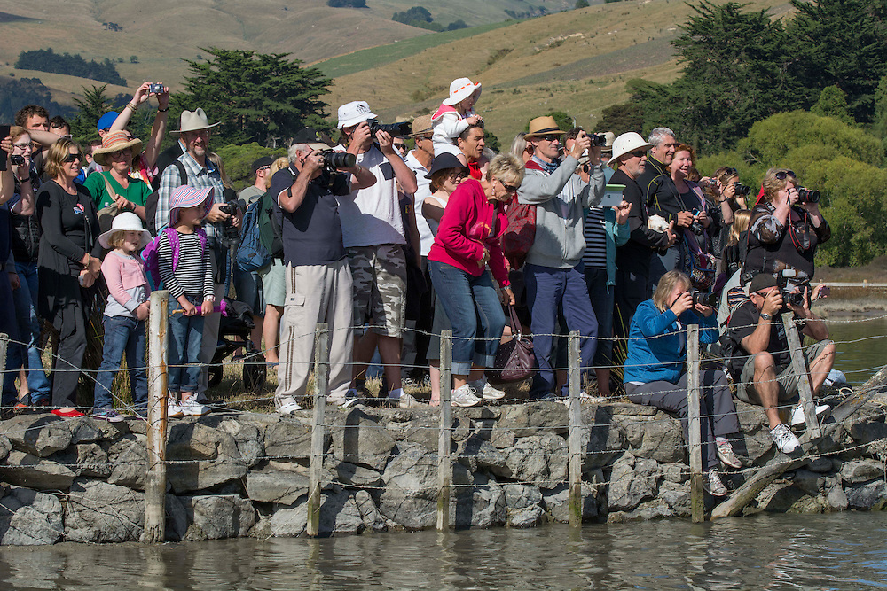 A bank of photography enthusiasts at the Waitangi Day Commemorations, Okains Bay, Banks Peninsula, New Zealand, Thursday, 6 February, 2014.  <br /> Credit:SNPA / David Alexander