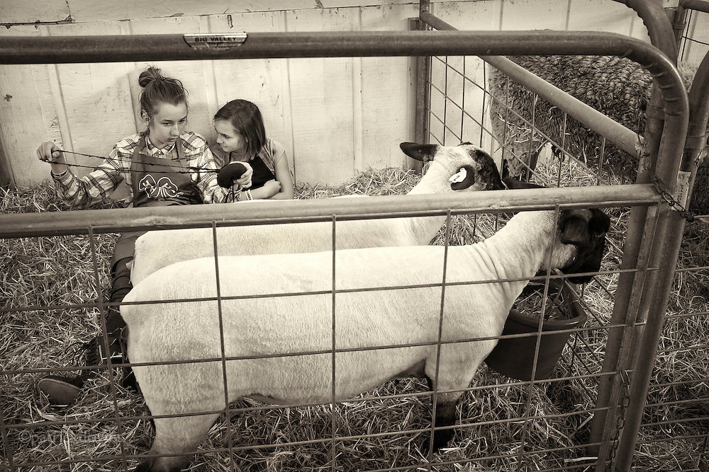 Two friends hang out with a pair of ewes, and tell secrets. Clallam County fair.