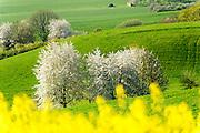 Landschaft im Frühling im nordwestlichen Odenwald, Hessen, Deutschland   Landscape in the spring in the northwestern Odenwald, Hesse, Germany