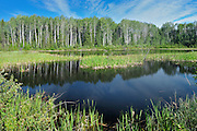 Wetland near the Yukon border<br /> Stewart Cassiar Highway near Yukon border<br /> British Columbia<br /> Canada