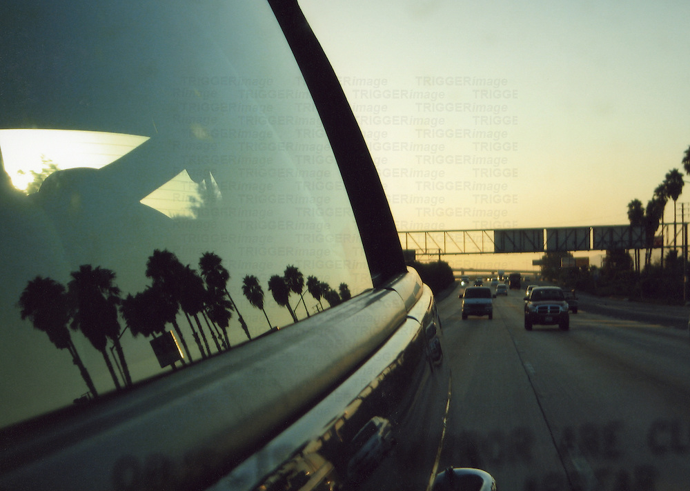 Reflections of palm trees in a car window in southern California