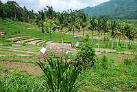 Beautiful countryside showing terraced rice fields in Bali, Indonesia.
