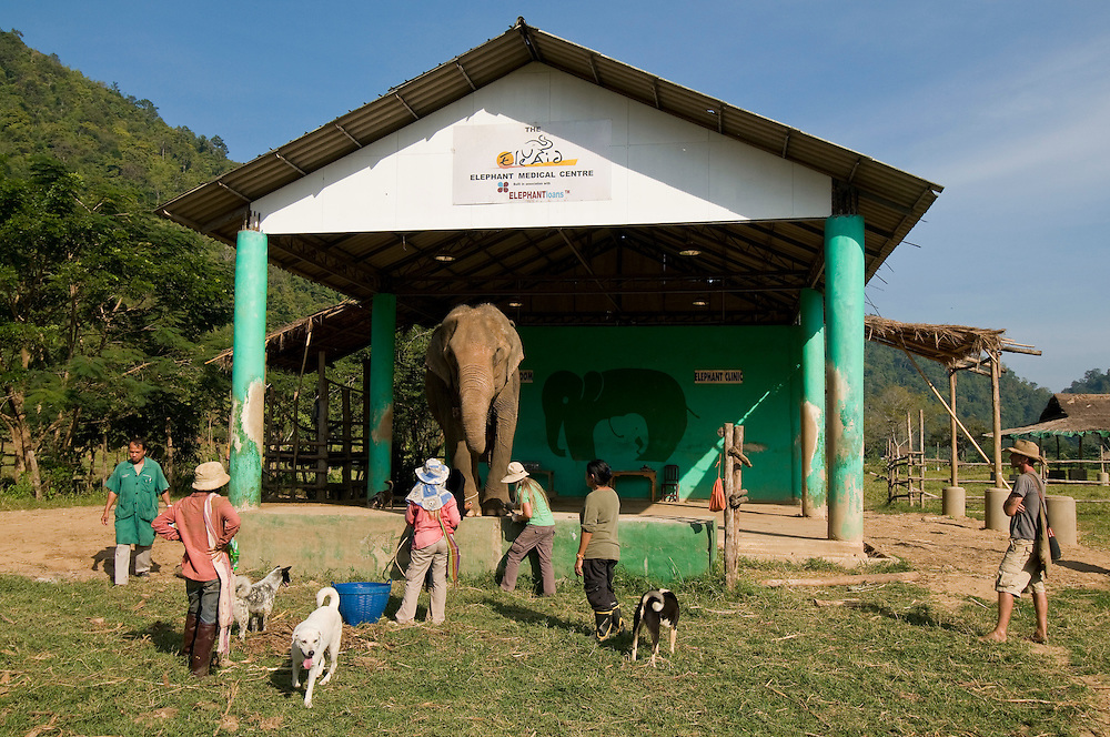 "The park veterinarian (far left) and Lek Chailert look on as Carol Buckley and Jody Thomas give an elephant a pedicure at the Elephant Nature Park near Chiang Mai, Thailand.  Sangduen ""Lek"" Chailert founded the park as a sanctuary and rescue centre for elephants.  The park currently has 32 elephants sponsored and supported by volunteers from all over the world."