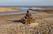 Benacre national nature reserve, North Sea coast, Suffolk, England, UK