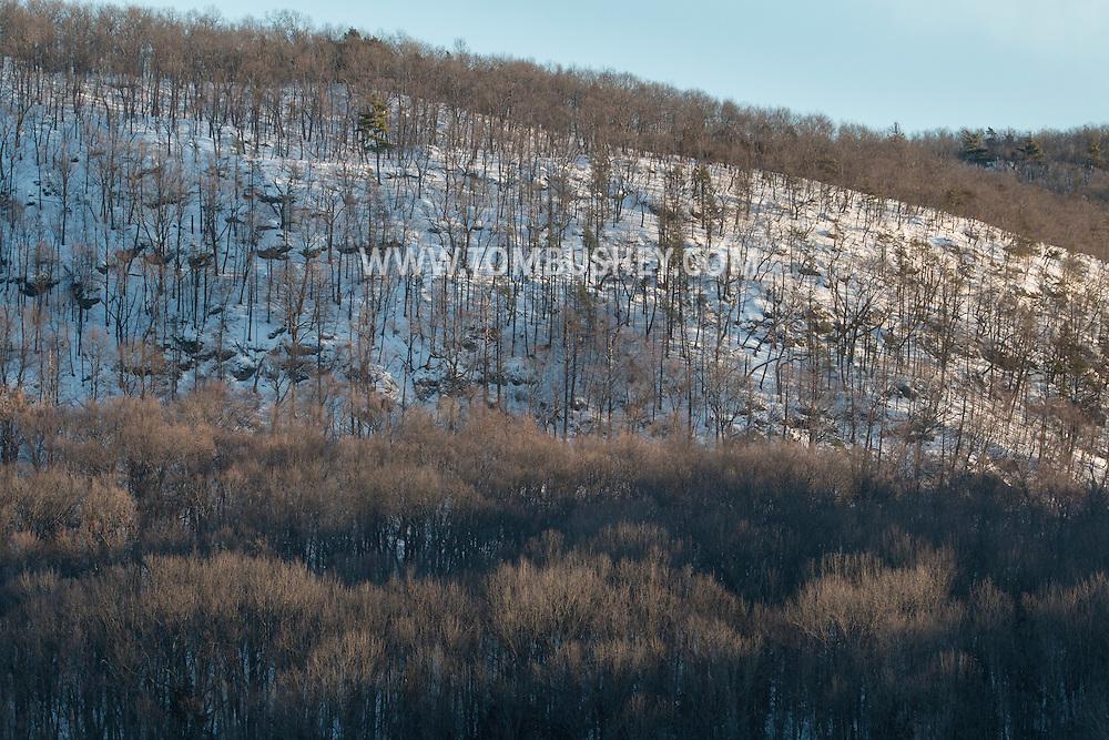 Chester, New York - Winter trees.