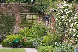 Gardener on ladder pruning roses growing on the brick walls  at Sissinghurst Castle Garden
