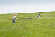 Ducks Unlimited biologists at work, trapping ducks, Goebel Ranch, McPherson County, South Dakota