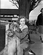 Irish Kennel Club Dog Show..17.03.1961