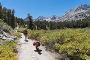 Woman backpacking with dog (golden retriever) in the Little Lakes Valley, John Muir Wilderness, Inyo National Forest, California