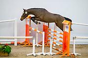 Qalando Prinseveld<br /> KWPN Eerste Bezichtiging <br /> © DigiShots