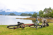 Touring concept, bicycle and dogs in beautiful landscape