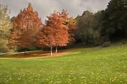 Autumn Colours, Tasmania
