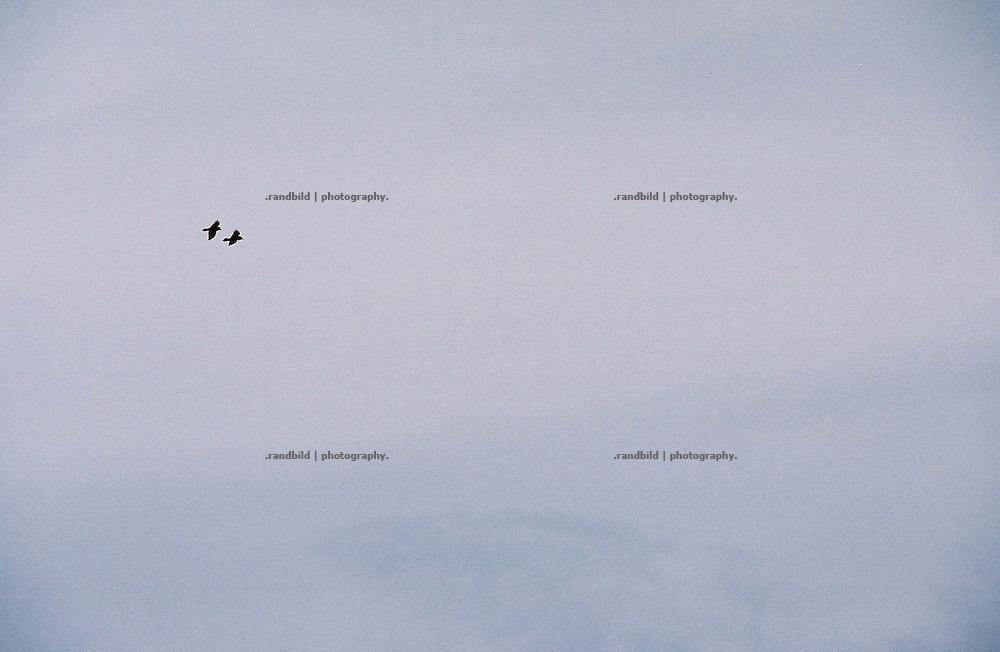 Zwei Krähen ziehen im wendländischen Himmel ihre Runden.