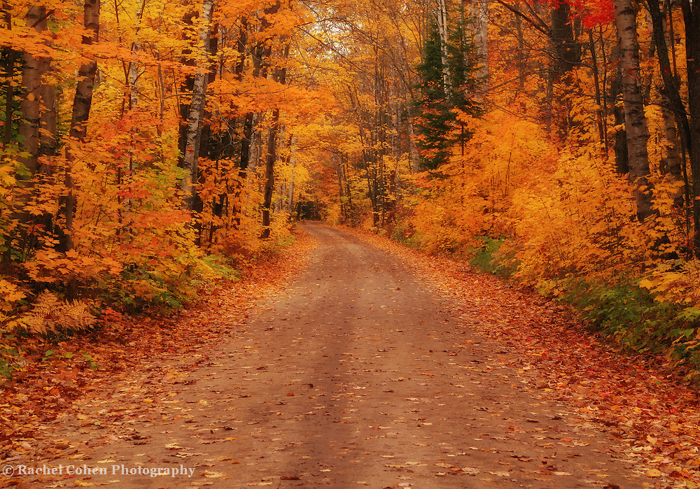 &quot;Magical Autumn Mystery&quot;<br />
