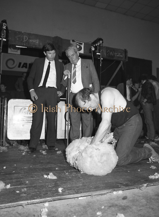 Sheep Shearing and Fleece Rolling Competition. (R57)..1987..07.05.1987..05.07.1987..7th May 1987..The International Sheep Shearing Championship was held today at the RDS in Dublin. A second part of the competition involved the rolling and tying of the fleece once the sheep is sheared...Seamus Brannick is pictured in the Fleece Rolling and Tying section under the watchful eyes of the judges.ls.