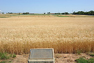 The Magruder Plots:<br />Environmental Production History 1892-2004<br /><br />In 1892, A.C. Magruder initiated a soil fertility experiment which would be continued for more than 100 years. The Magruder plots were initially established to evaluate wheat production on native prairie soils without fertilization. Although several changes have been made to the initial trial, the Magruder plots remain the oldest continuous soil fertility wheat experiment west of the Mississippi River. One of the key findings of the Magruder Plots has been the sustained wheat production of more than 16 bu/ac, following more than 100 years without any fertilization.  Not until the last 5-10 years have we seen any benefit of K fertilization.  Early on, the response to P fertilization was notable (P-only versus the check).  As issues of sustainability and environmental safety become increasingly more important, trials such as the Magruder Plots will be further explored.
