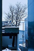 Vetur í Reykjavík. Byggtí kringum tré.