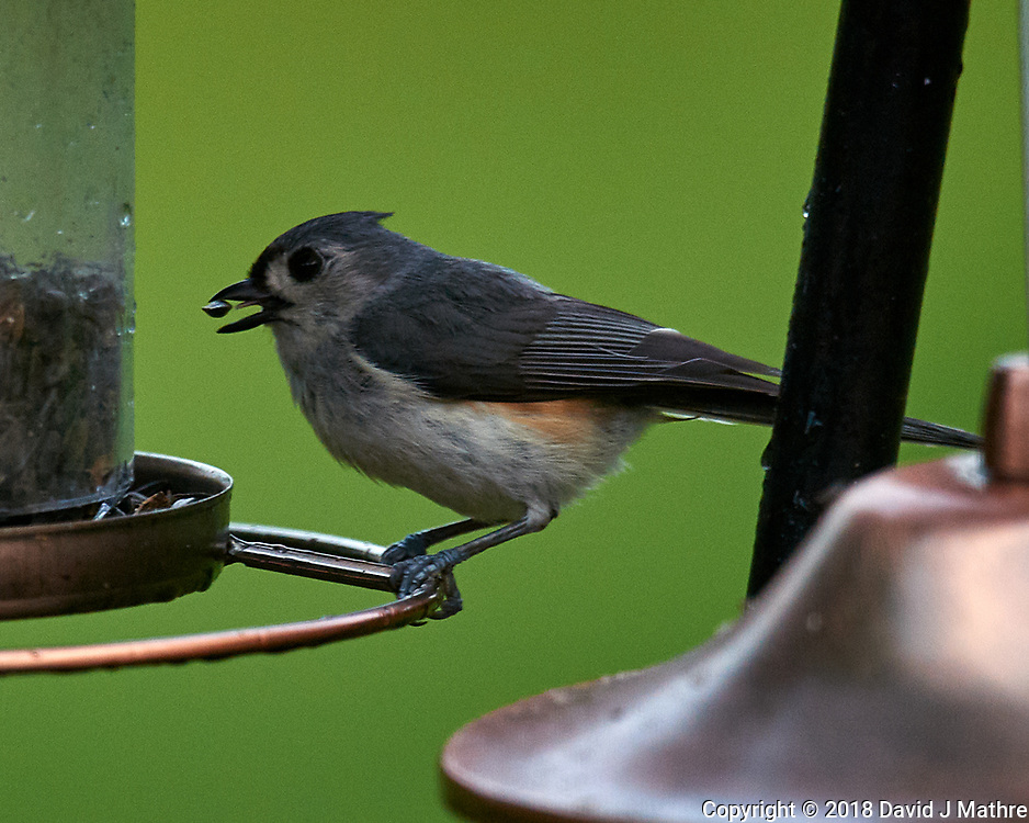 Tufted Titmouse at the Bird Feeder. Image taken with a Nikon D5 camera and 600 mm f/4 VR lens.