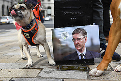 "© Licensed to London News Pictures. 07/10/2018. LONDON, UK. Participants next to a photo of Jacob Rees-Mogg join dog owners, accompanied by their pets, take part in the ""Wooferendum Dog March"", calling for a People's Vote on Brexit, walking from Waterloo Place to Parliament Square.  Photo credit: Stephen Chung/LNP"
