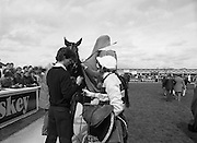 Irish Grand National At Fairyhouse.  (R54)..1987..20.04.1987..04.20.1987..20th April 1987..The Easter Racing Festival at Fairyhouse included the running of the Jameson sponsored Irish Grand National. Another featured race was the Jameson Gold, Jameson's, Irish, Whiskey, jameson, Cup which was also run on Easter Monday...Mr B Sheridan the winning jockey, saddle in hand, heads off to the weigh room as 'Wolf of Badenoch' is blanketed by the stable hands.