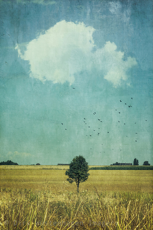 Single tree standing on a harvested field. Texturized photograph