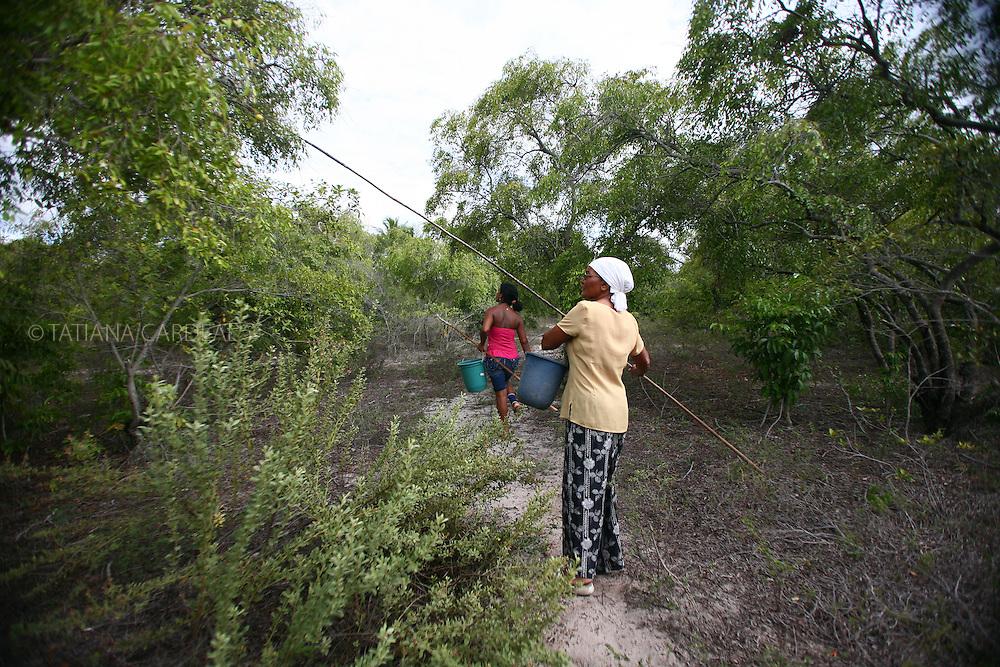 Catadoras de mangaba, colhem em areas ainda permitidas no povoado de Pontal, Indiaroba.<br /> Sergipe, Brasil.