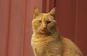 Pretty orange cat out doors