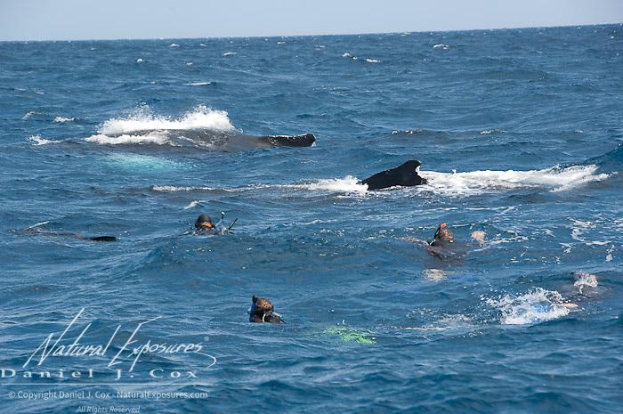 Humpback Whale (Megaptera novaeangliae). Tourists in the Caribbean Ocean enjoying whales.