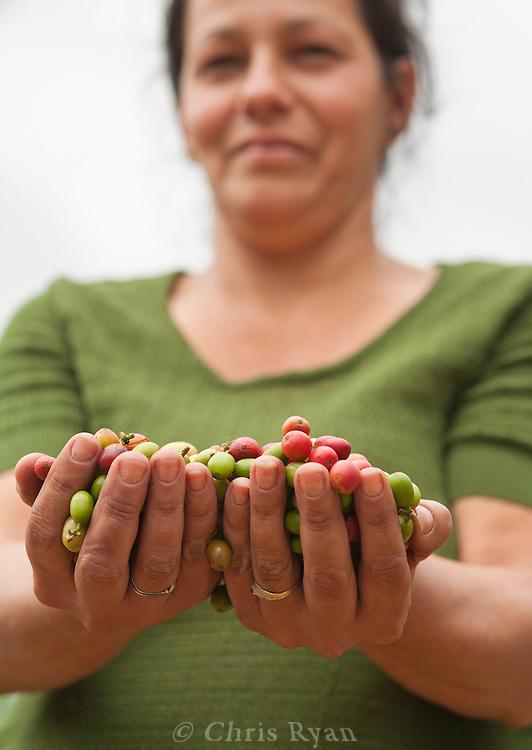 Woman holding handful of coffee berries, Vinales Valley, Cuba