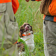 Photography of the Cocker Spaniel Hunting Enthusiasts Of Southeastern Wisconsin (CSHESEW) Hunt Test. The event took place at the Mazomanie Unit Lower Wisconsin Riverway, in Mazomanie , WI, July 26-27, 2013.