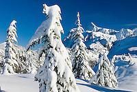 Mount Shuksan in winter from Kulshan Ridge, Heather Meadows Recreation Area Washingtron USA