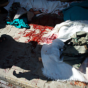 August 10, 2012 - Aleppo, Syria: Blood runs down the footpath outside an improvised hospital in central Aleppo. At least 12 people have died and more the 20 got injured during heavy shelling from the Syrian Army against a bakery in the residential area of Tariq Al-Bab in central Aleppo...The Syrian Army have in the past week increased their attacks on residential neighborhoods where Free Syria Army rebel fights have their positions in Syria's commercial capital, Aleppo. (Paulo Nunes dos Santos/Polaris)