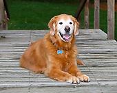 Cubby the Dog