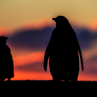 Double silhouette, the Neck, Falkland Islands, 2017