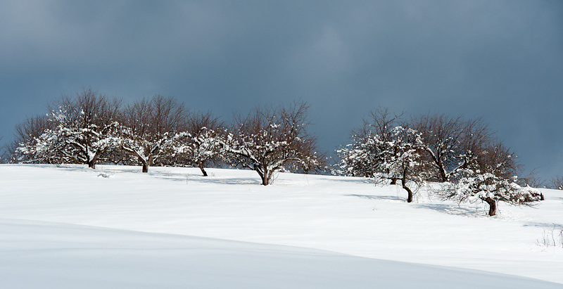 Winter in the Apple Orchard at Canterbury Shaker Village.<br />