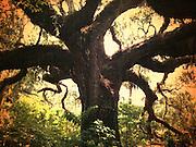 hipstamatic big tree