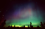 Northern lights (Aurora borealis) and forest<br /> Sandilands Provincial Forest<br /> Manitoba<br /> Canada